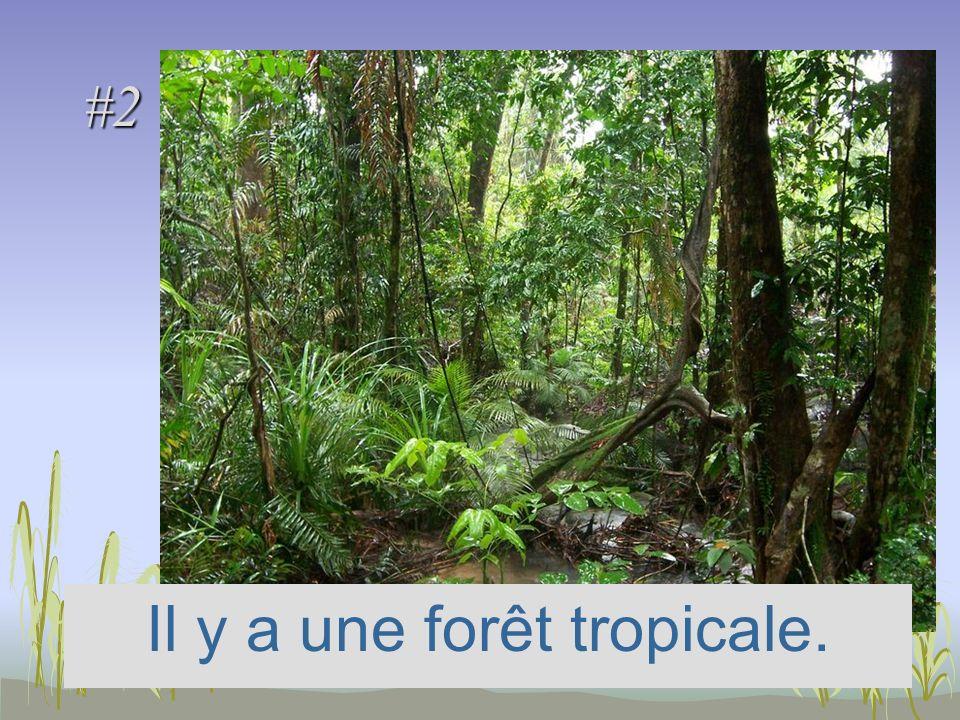 #2 Il y a une forêt tropicale.