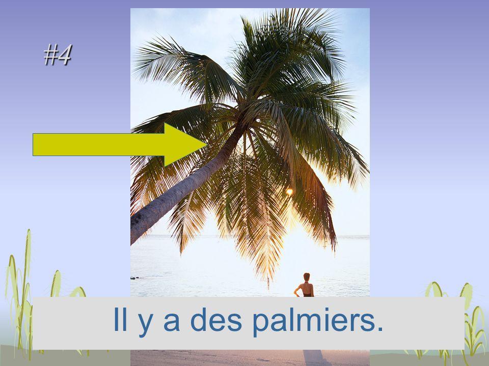 #4 Il y a des palmiers.