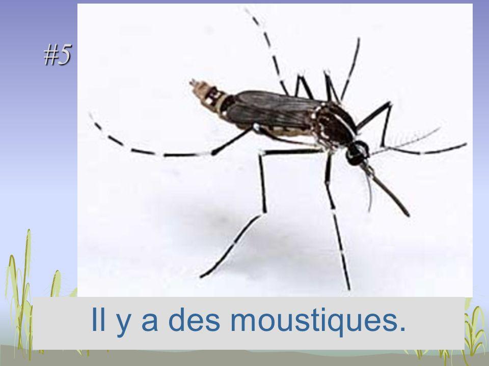 #5 Il y a des moustiques.