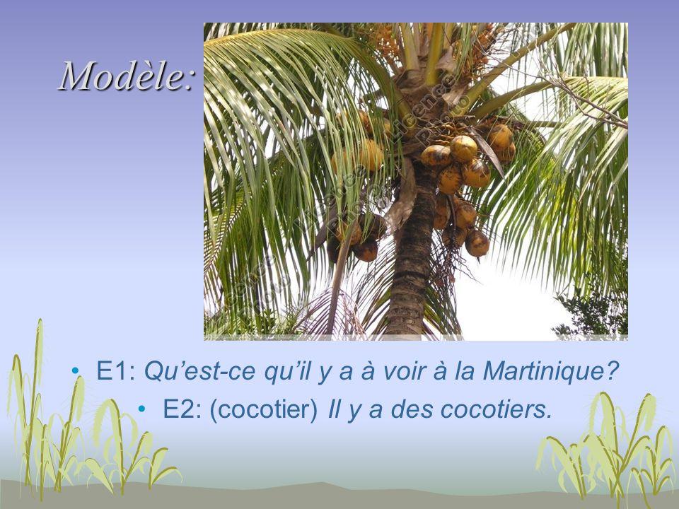 Modèle: E1: Quest-ce quil y a à voir à la Martinique E2: (cocotier) Il y a des cocotiers.