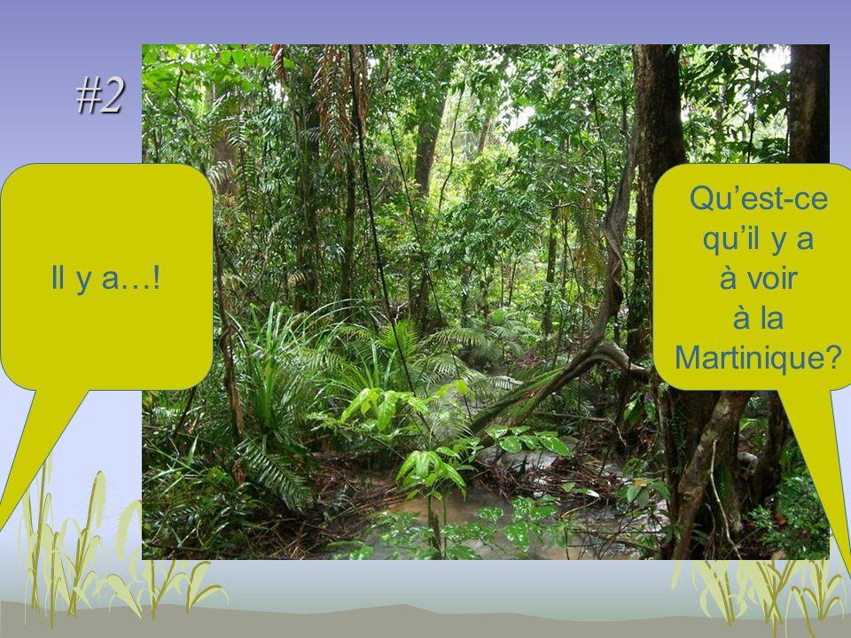#2 Quest-ce quil y a à voir à la Martinique Il y a…!