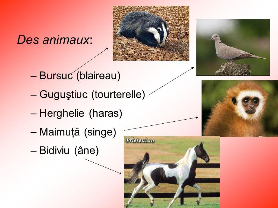 Des animaux: –Bursuc (blaireau) –Guguştiuc (tourterelle) –Herghelie (haras) –Maimuţă (singe) –Bidiviu (âne)