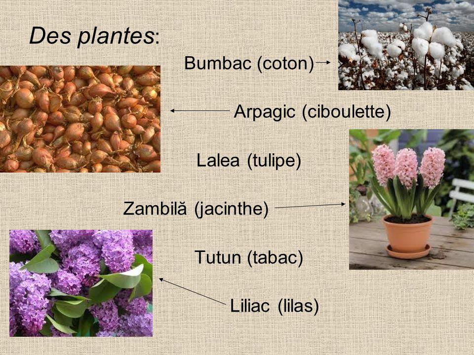 Des plantes : Bumbac (coton) Arpagic (ciboulette) Lalea (tulipe) Zambilă (jacinthe) Tutun (tabac) Liliac (lilas)