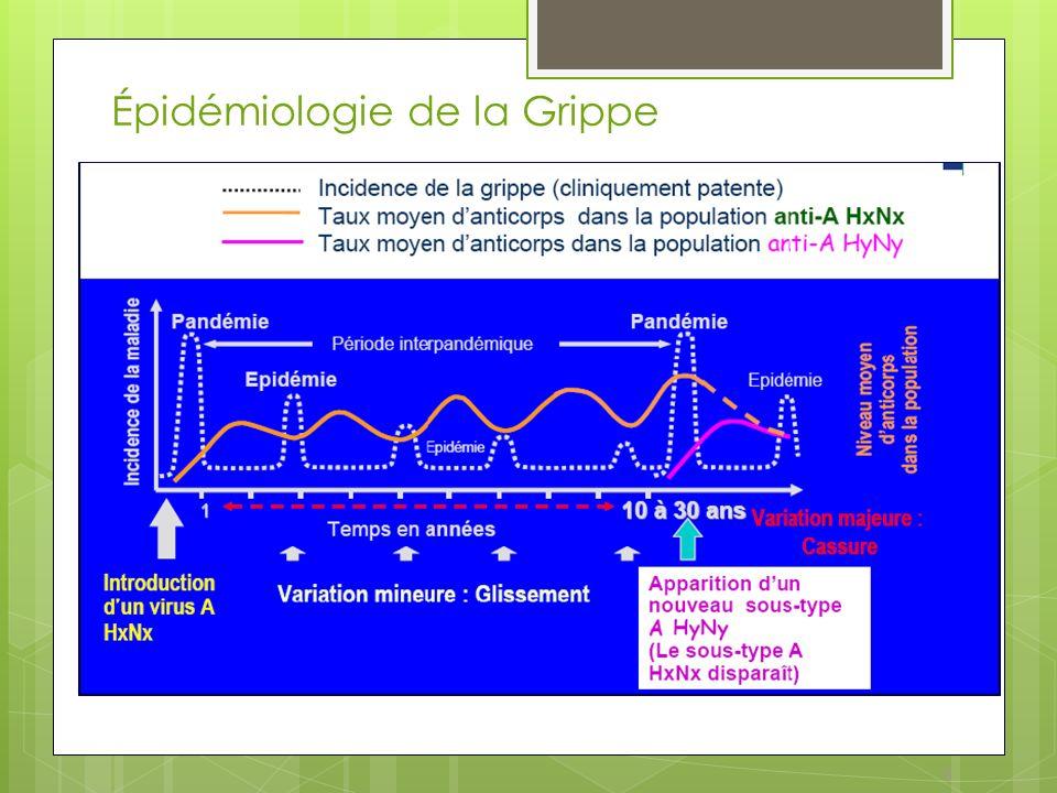 9 Épidémiologie de la Grippe