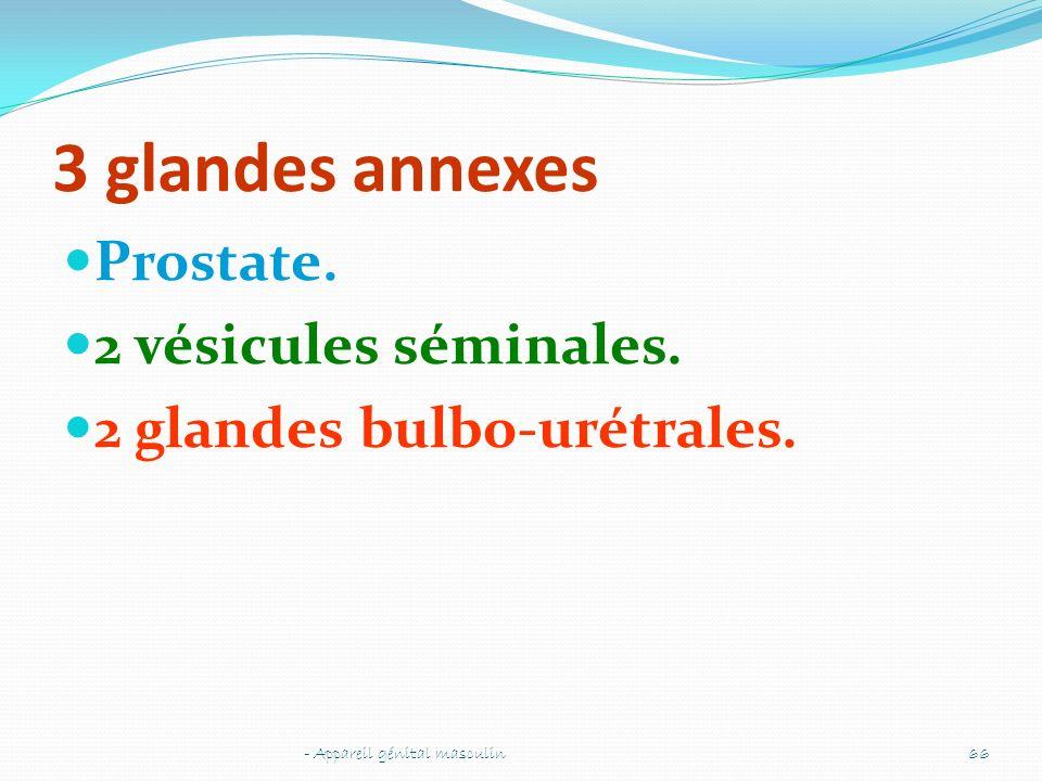 3 glandes annexes Prostate. 2 vésicules séminales. 2 glandes bulbo-urétrales. - Appareil génital masculin66