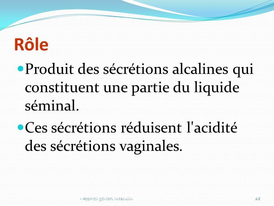 Rôle Produit des sécrétions alcalines qui constituent une partie du liquide séminal. Ces sécrétions réduisent l'acidité des sécrétions vaginales. - Ap