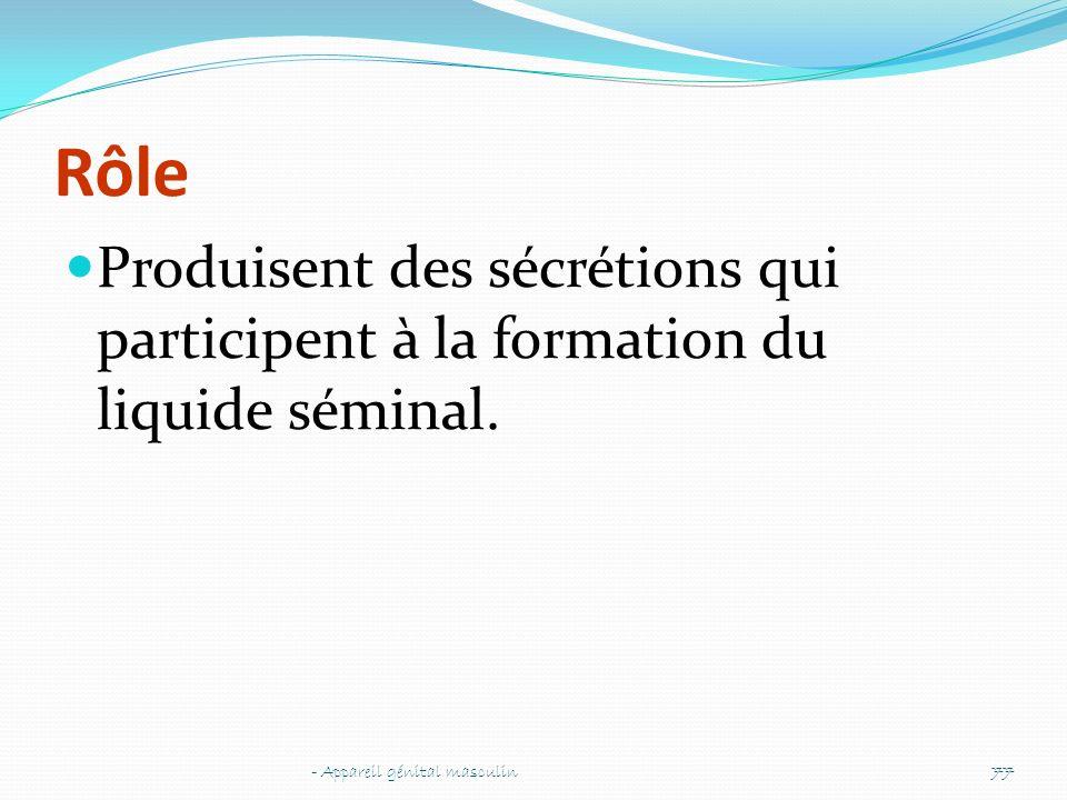 Rôle Produisent des sécrétions qui participent à la formation du liquide séminal. - Appareil génital masculin77