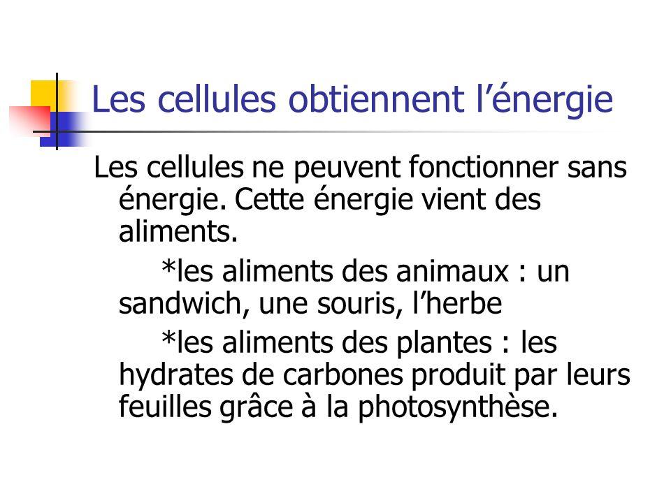 Les cellules obtiennent lénergie Les cellules ne peuvent fonctionner sans énergie. Cette énergie vient des aliments. *les aliments des animaux : un sa