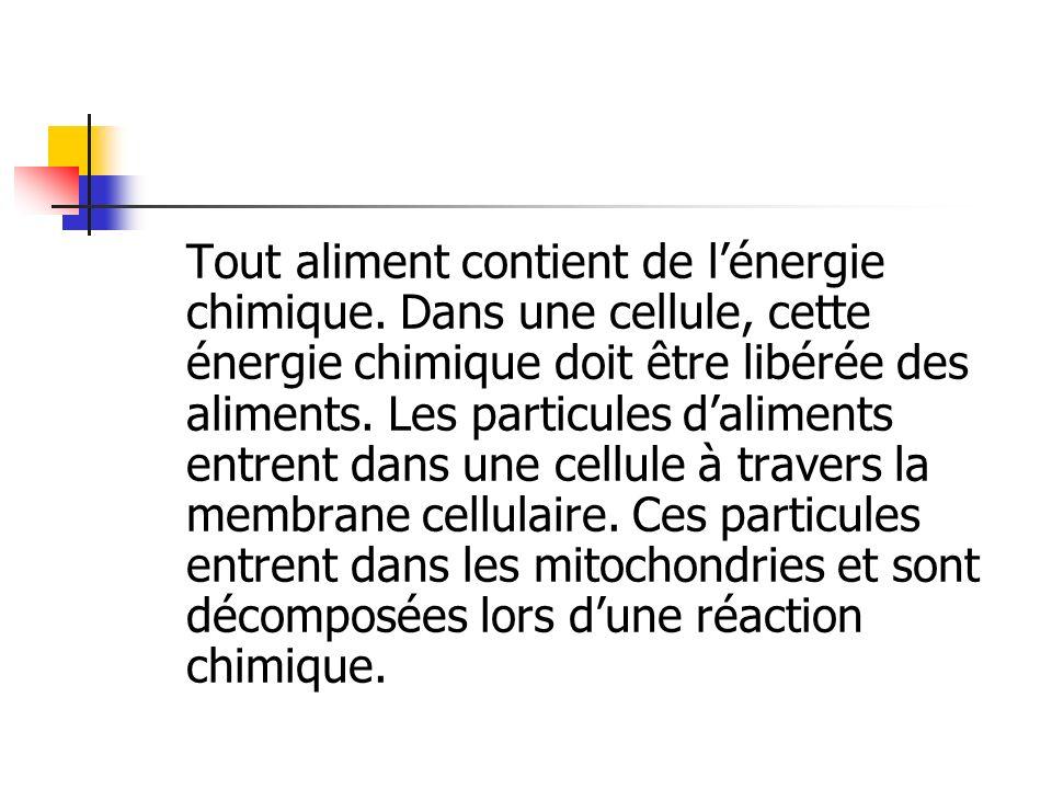 Tout aliment contient de lénergie chimique. Dans une cellule, cette énergie chimique doit être libérée des aliments. Les particules daliments entrent