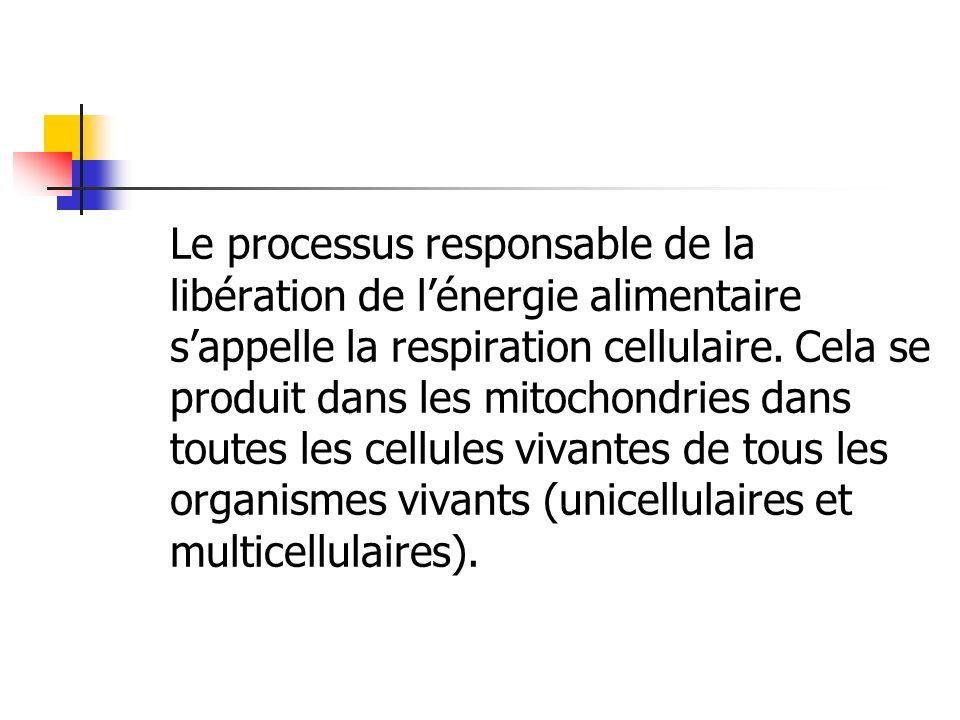 Le processus responsable de la libération de lénergie alimentaire sappelle la respiration cellulaire. Cela se produit dans les mitochondries dans tout