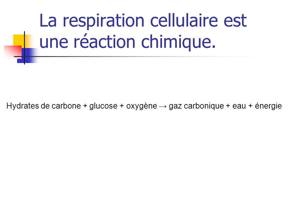 La respiration cellulaire est une réaction chimique. Hydrates de carbone + glucose + oxygène gaz carbonique + eau + énergie