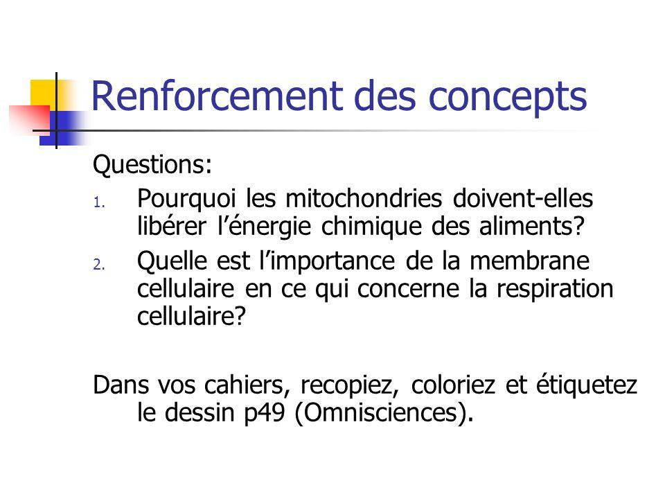 Renforcement des concepts Questions: 1. Pourquoi les mitochondries doivent-elles libérer lénergie chimique des aliments? 2. Quelle est limportance de
