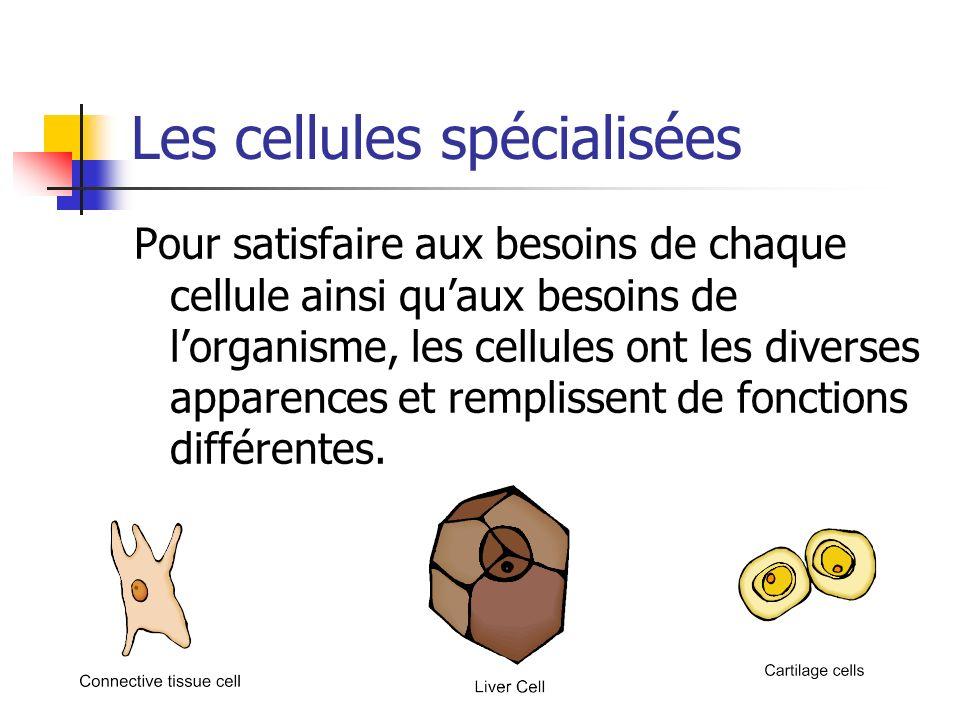 Les cellules spécialisées Pour satisfaire aux besoins de chaque cellule ainsi quaux besoins de lorganisme, les cellules ont les diverses apparences et