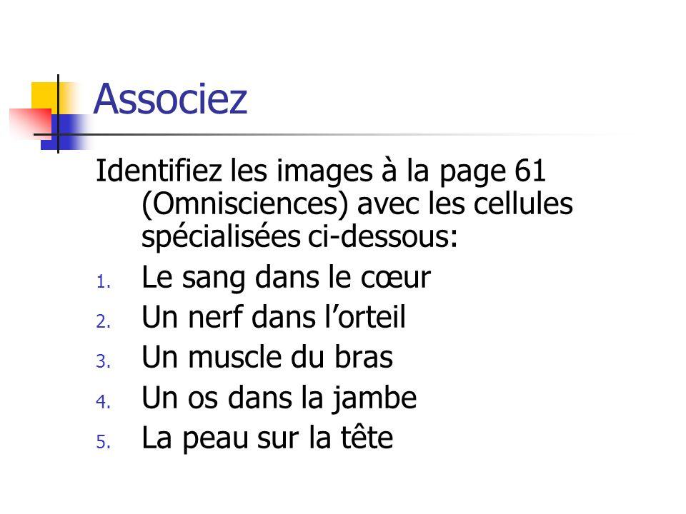Associez Identifiez les images à la page 61 (Omnisciences) avec les cellules spécialisées ci-dessous: 1. Le sang dans le cœur 2. Un nerf dans lorteil