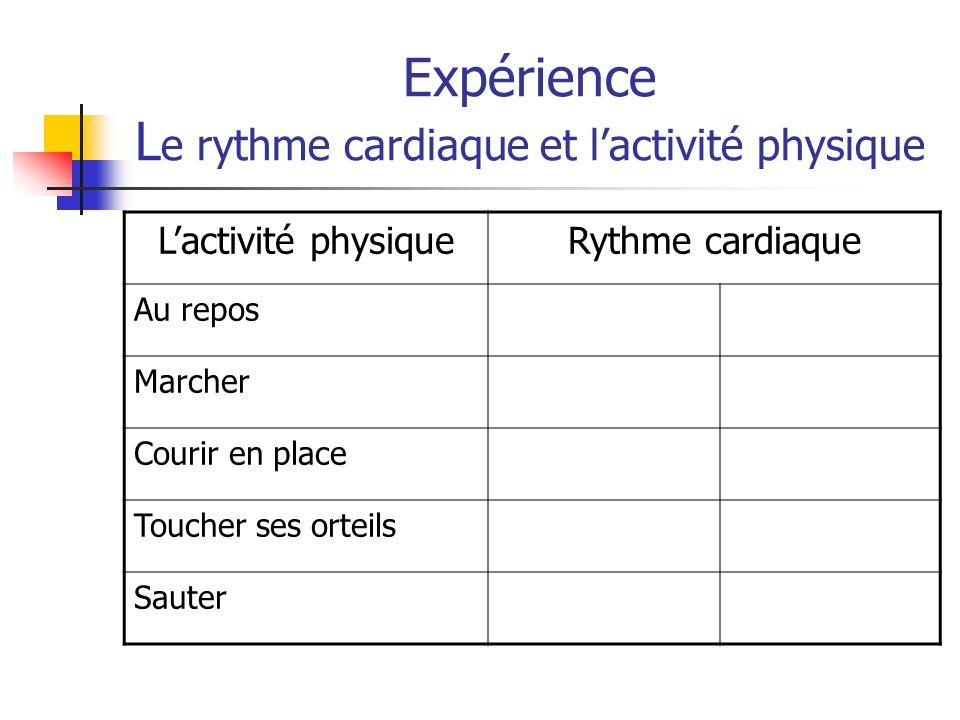 Expérience L e rythme cardiaque et lactivité physique Lactivité physiqueRythme cardiaque Au repos Marcher Courir en place Toucher ses orteils Sauter