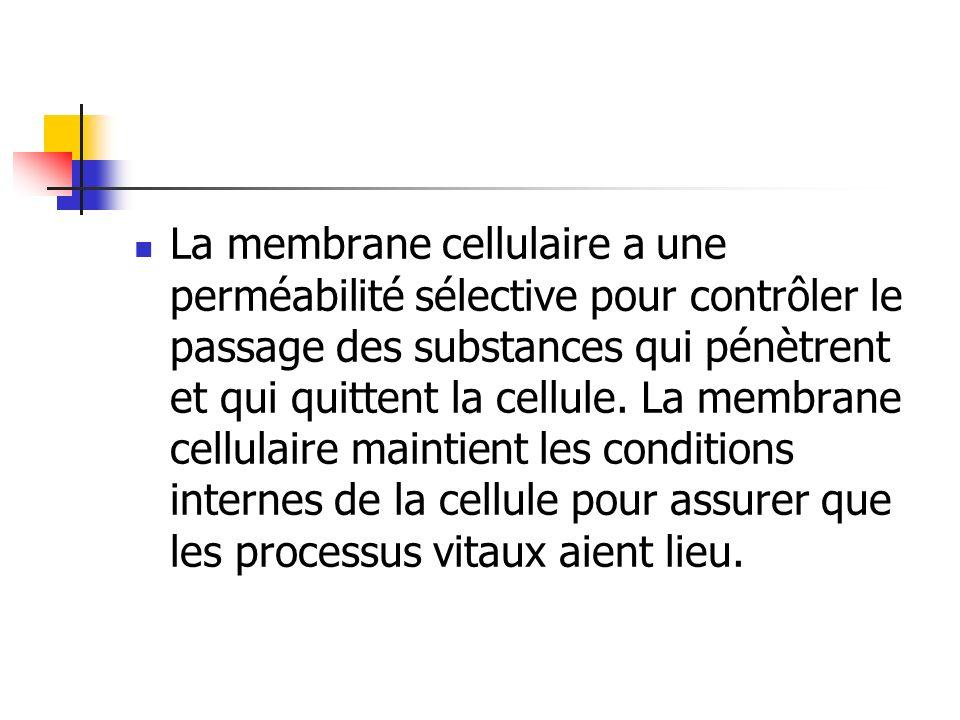 La membrane cellulaire a une perméabilité sélective pour contrôler le passage des substances qui pénètrent et qui quittent la cellule. La membrane cel