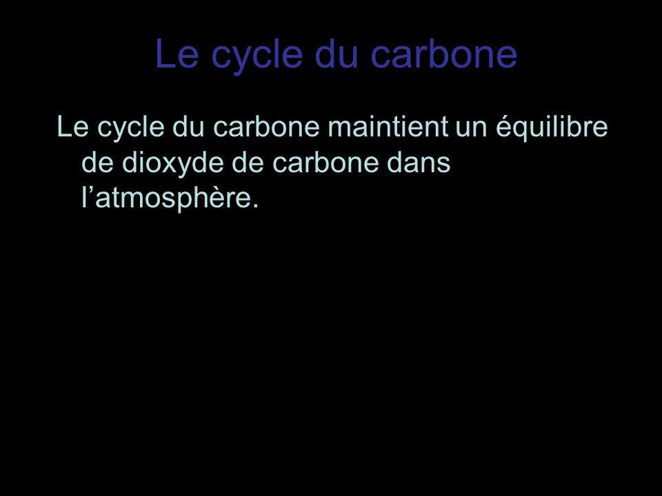 Le cycle du carbone Le cycle du carbone maintient un équilibre de dioxyde de carbone dans latmosphère.