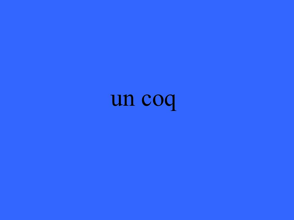 un coq