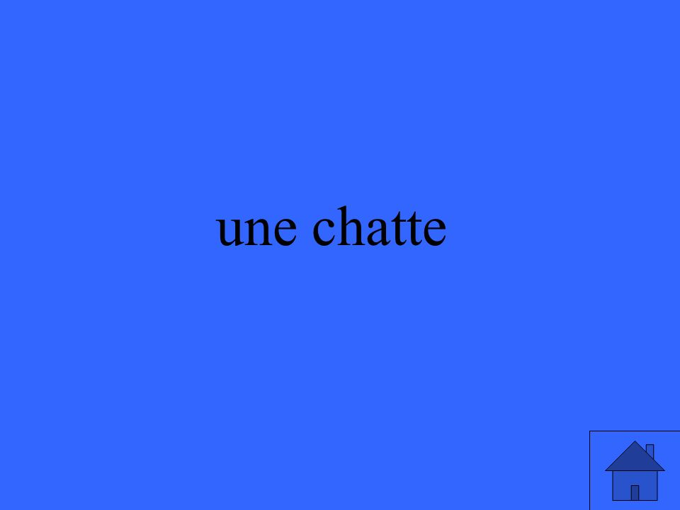 une chatte