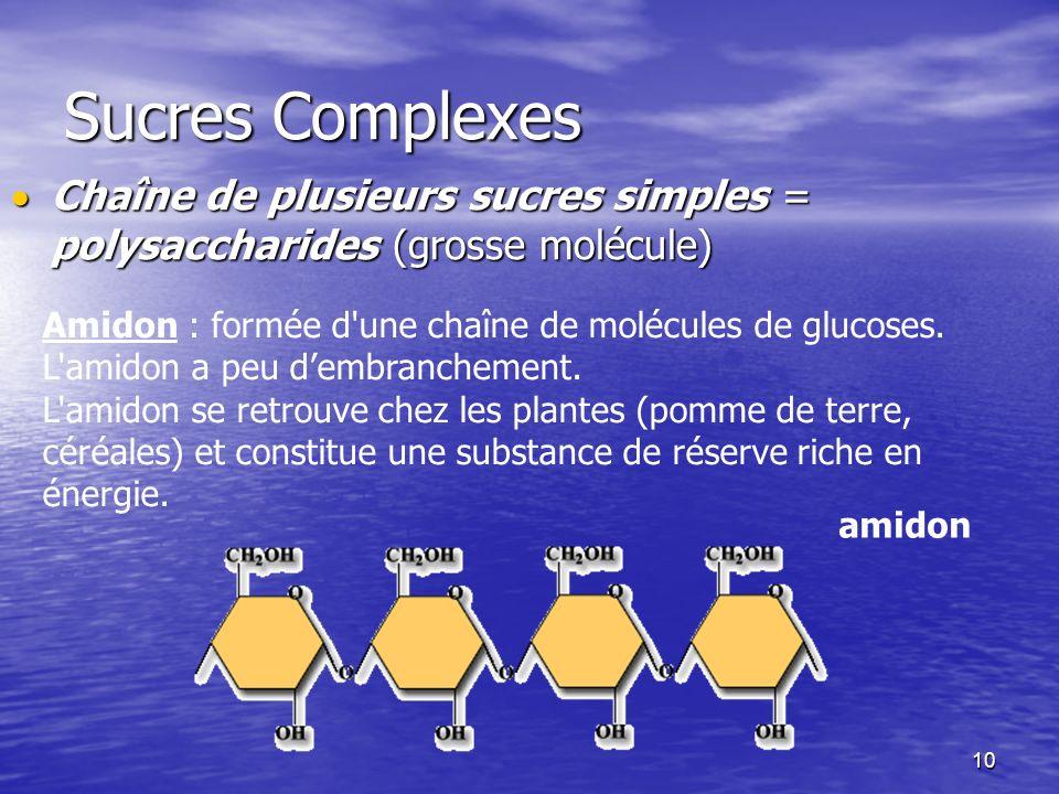 10 Sucres Complexes Chaîne de plusieurs sucres simples = polysaccharides (grosse molécule) Chaîne de plusieurs sucres simples = polysaccharides (gross