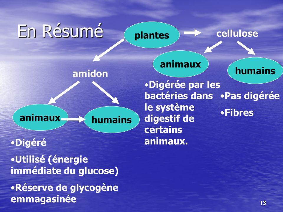 13 En Résumé cellulose plantes amidon animaux humains animaux Digéré Utilisé (énergie immédiate du glucose) Réserve de glycogène emmagasinée Digérée p
