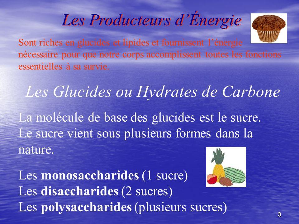 3 Les Producteurs dÉnergie Sont riches en glucides et lipides et fournissent lénergie nécessaire pour que notre corps accomplissent toutes les fonctio