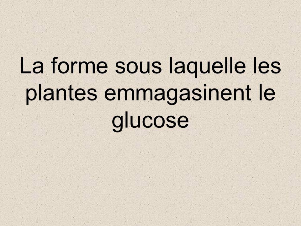 Quest-ce que le glucose? (ou autre monosaccharide) Retour au jeu
