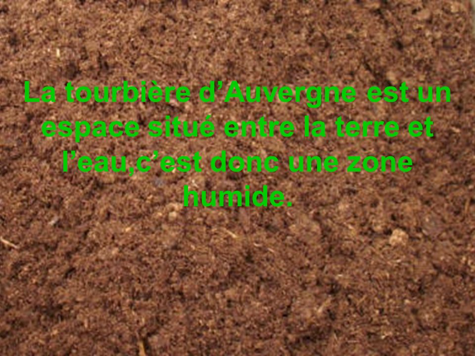 La tourbière dAuvergne est un espace situé entre la terre et leau,cest donc une zone humide.