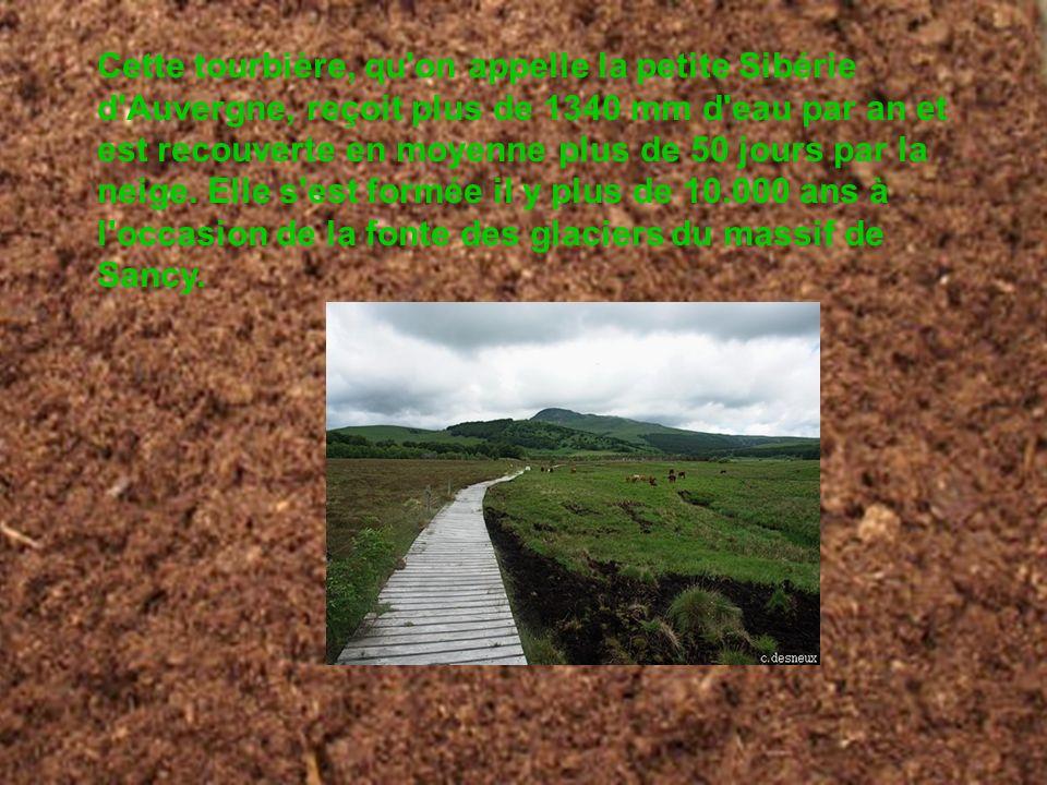 Cette tourbière, qu'on appelle la petite Sibérie d'Auvergne, reçoit plus de 1340 mm d'eau par an et est recouverte en moyenne plus de 50 jours par la