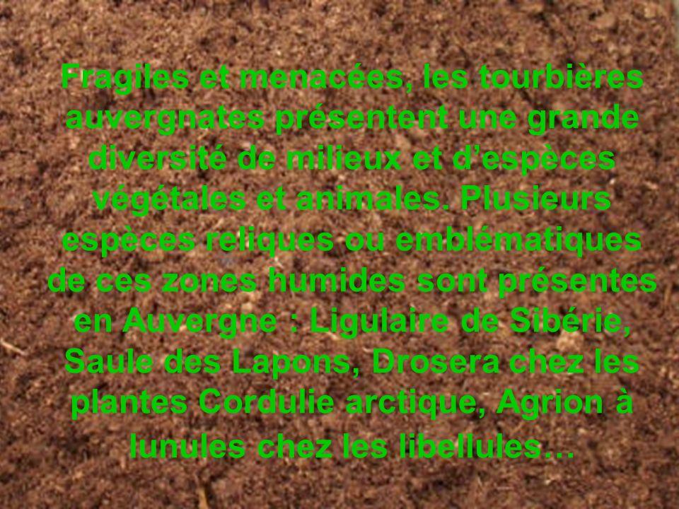 Fragiles et menacées, les tourbières auvergnates présentent une grande diversité de milieux et despèces végétales et animales. Plusieurs espèces reliq