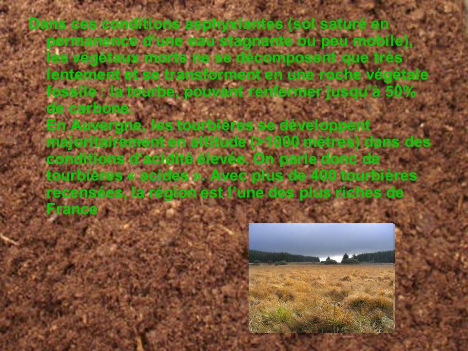 . Dans ces conditions asphyxiantes (sol saturé en permanence dune eau stagnante ou peu mobile), les végétaux morts ne se décomposent que très lentemen