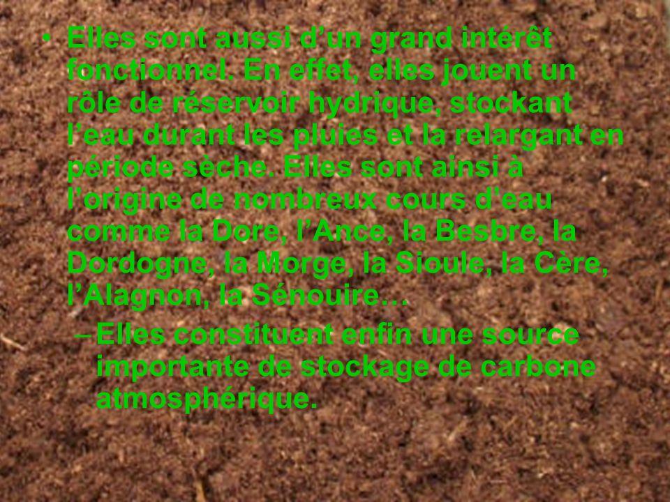 Elles sont aussi dun grand intérêt fonctionnel. En effet, elles jouent un rôle de réservoir hydrique, stockant leau durant les pluies et la relargant