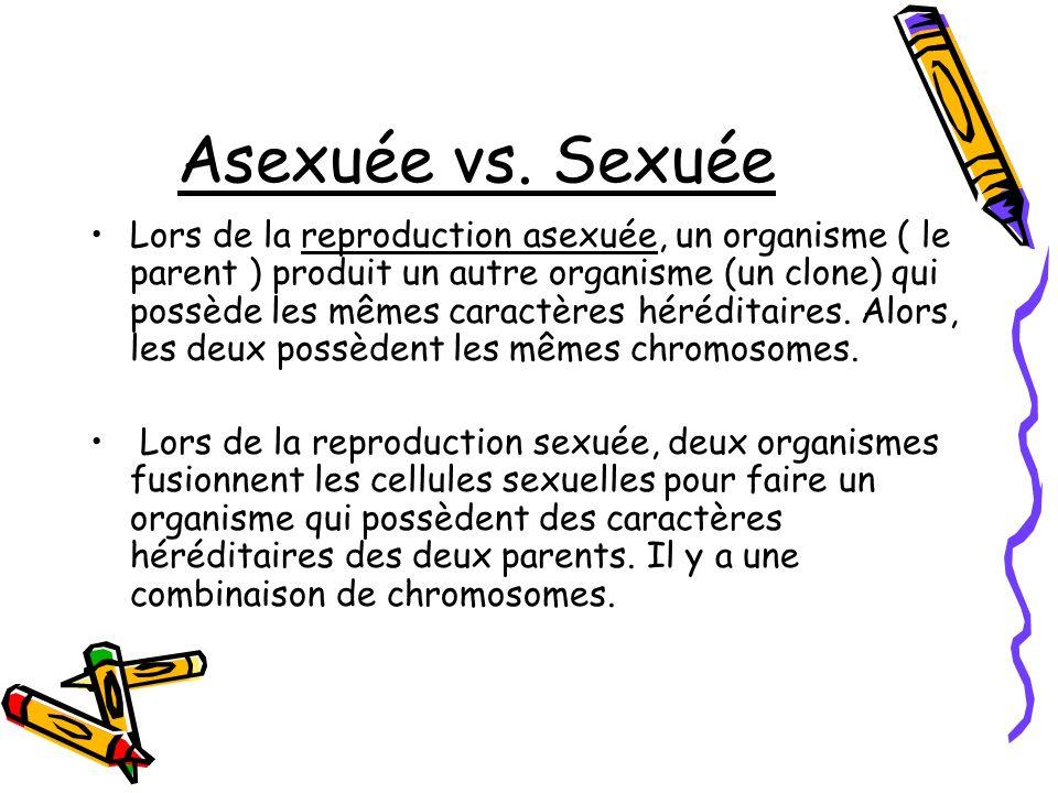Asexuée vs. Sexuée Lors de la reproduction asexuée, un organisme ( le parent ) produit un autre organisme (un clone) qui possède les mêmes caractères