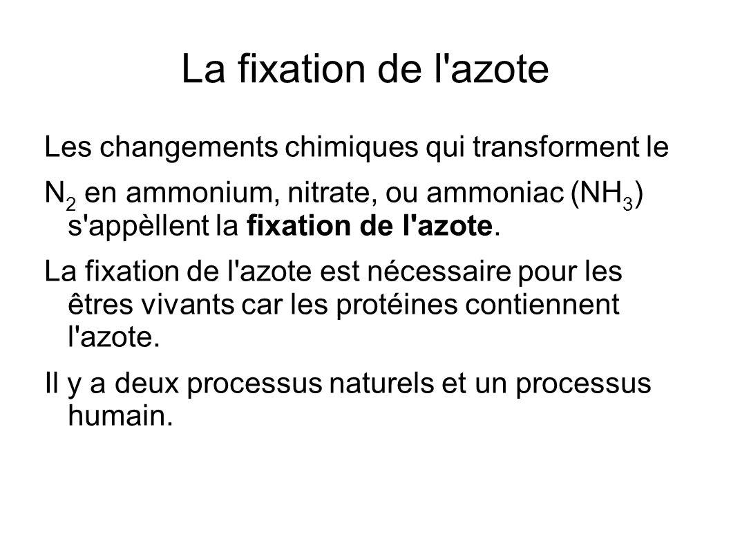 La fixation de l'azote Les changements chimiques qui transforment le N 2 en ammonium, nitrate, ou ammoniac (NH 3 ) s'appèllent la fixation de l'azote.
