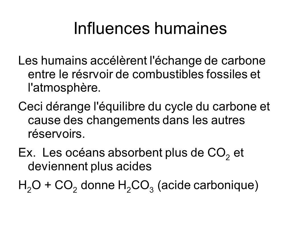 Influences humaines Les humains accélèrent l'échange de carbone entre le résrvoir de combustibles fossiles et l'atmosphère. Ceci dérange l'équilibre d