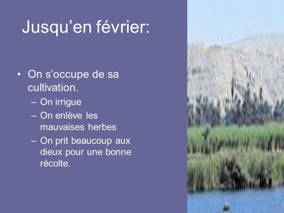 Jusquen février: On soccupe de sa cultivation. –On irrigue –On enlève les mauvaises herbes –On prit beaucoup aux dieux pour une bonne récolte.