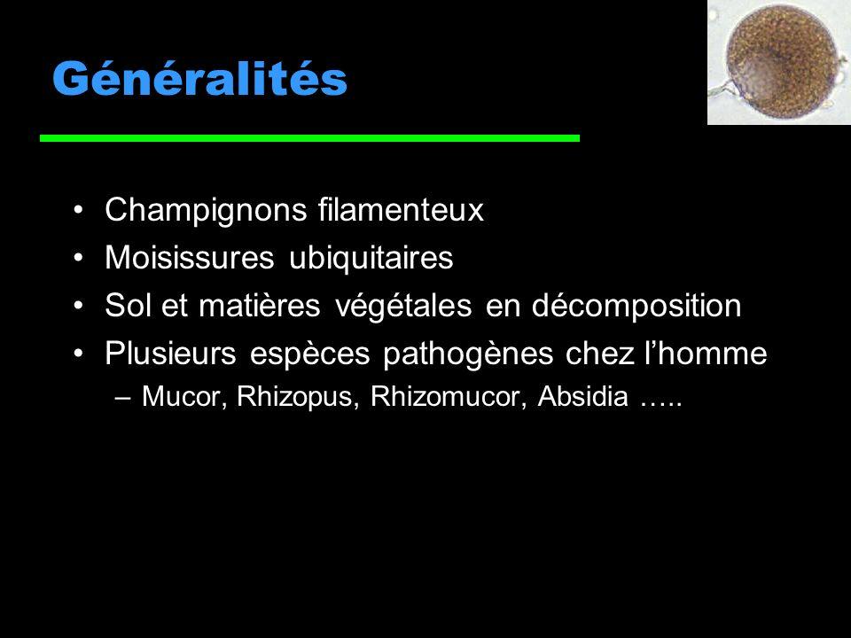 Généralités Champignons filamenteux Moisissures ubiquitaires Sol et matières végétales en décomposition Plusieurs espèces pathogènes chez lhomme –Mucor, Rhizopus, Rhizomucor, Absidia …..