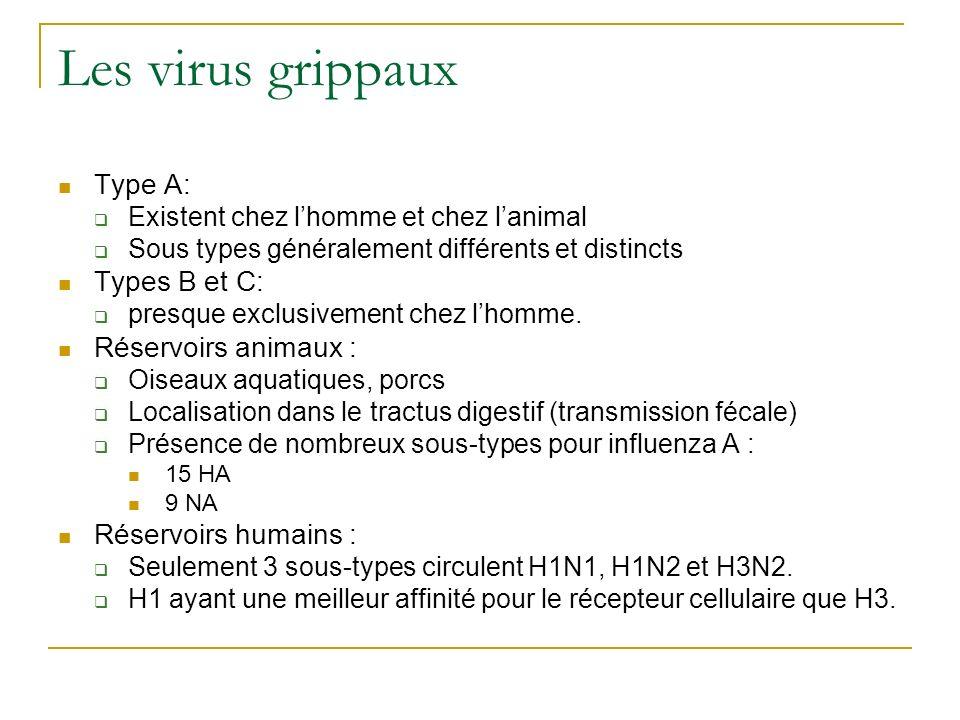 Les virus grippaux Type A: Existent chez lhomme et chez lanimal Sous types généralement différents et distincts Types B et C: presque exclusivement ch