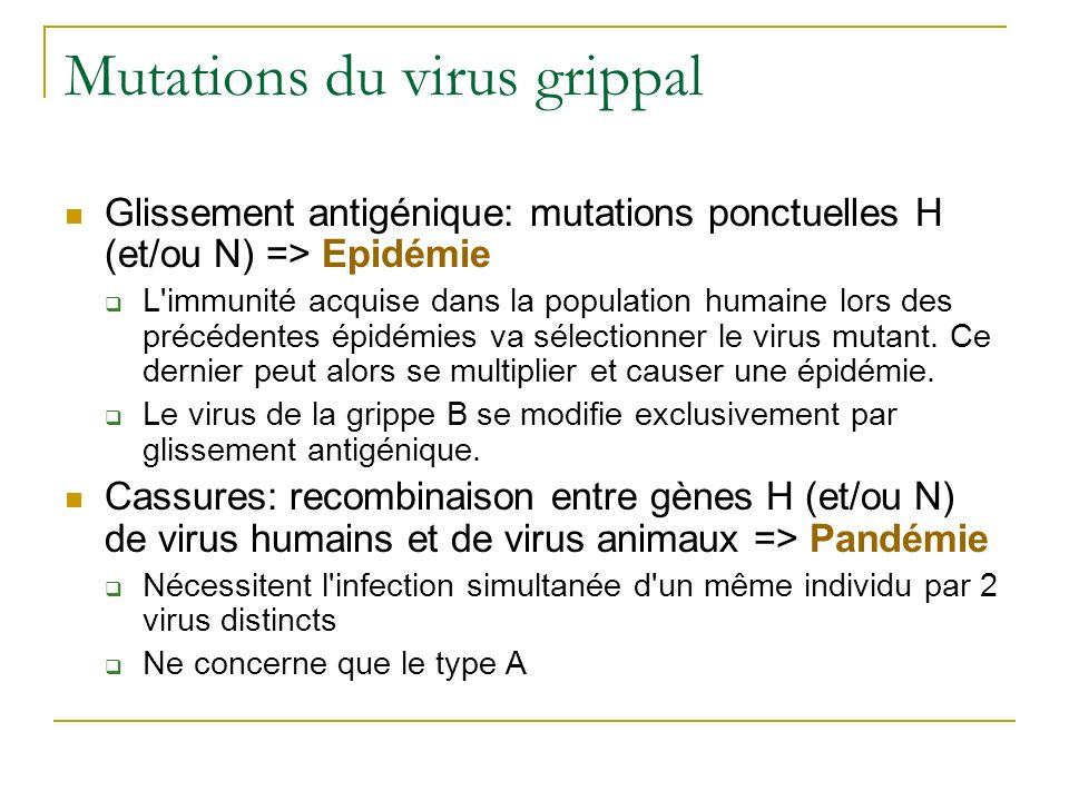Mutations du virus grippal Glissement antigénique: mutations ponctuelles H (et/ou N) => Epidémie L'immunité acquise dans la population humaine lors de