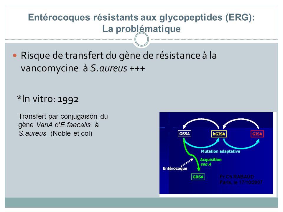 Entérocoques résistants aux glycopeptides (ERG): La problématique Risque de transfert du gène de résistance à la vancomycine à S.aureus +++ *In vitro: