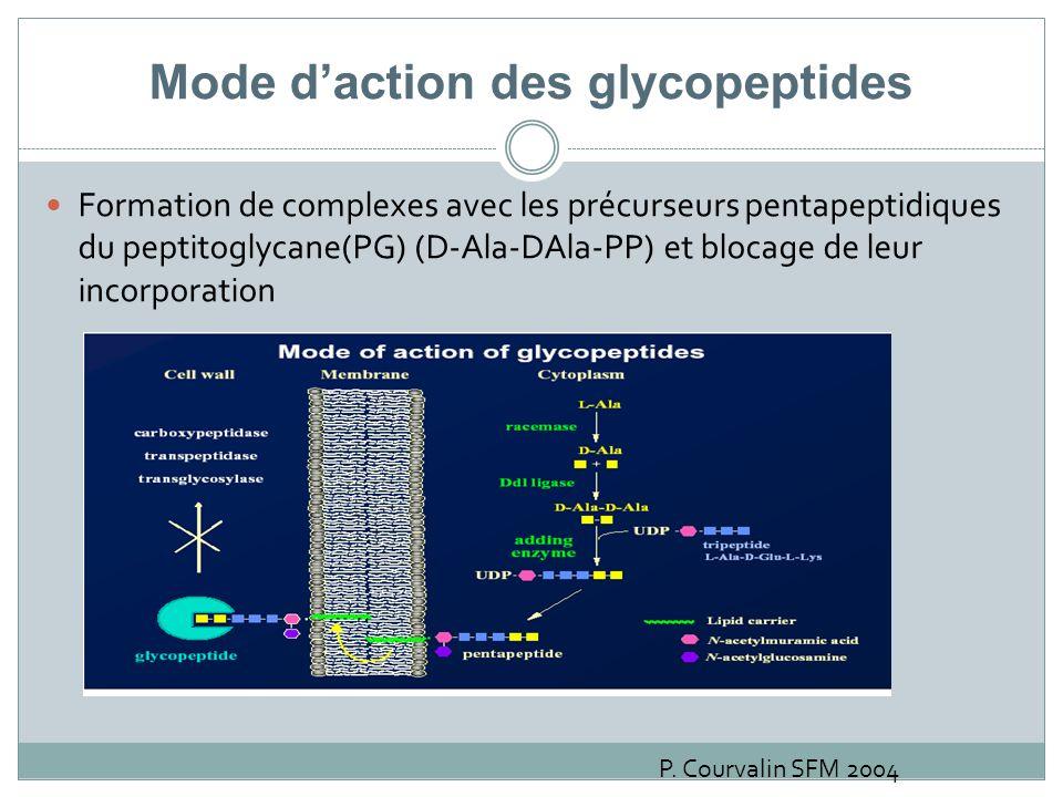 Mode daction des glycopeptides Formation de complexes avec les précurseurs pentapeptidiques du peptitoglycane(PG) (D-Ala-DAla-PP) et blocage de leur i