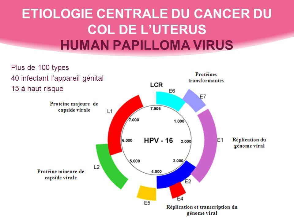 ETIOLOGIE CENTRALE DU CANCER DU COL DE LUTERUS HUMAN PAPILLOMA VIRUS Plus de 100 types 40 infectant lappareil génital 15 à haut risque