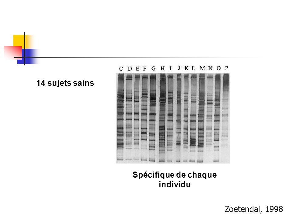 Zoetendal, 1998 14 sujets sains Spécifique de chaque individu
