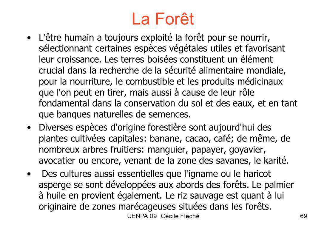 UENPA.09 Cécile Fléché69 La Forêt L être humain a toujours exploité la forêt pour se nourrir, sélectionnant certaines espèces végétales utiles et favorisant leur croissance.