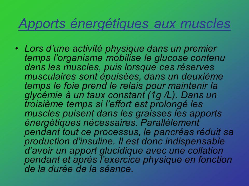Apports énergétiques aux muscles Lors dune activité physique dans un premier temps lorganisme mobilise le glucose contenu dans les muscles, puis lorsq