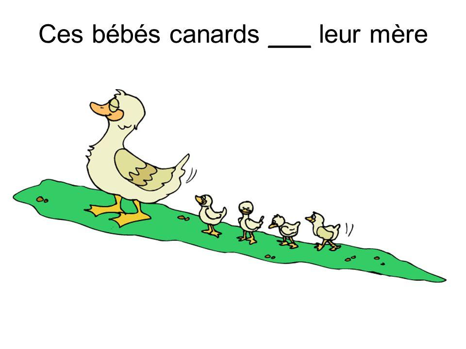 Ces bébés canards ___ leur mère