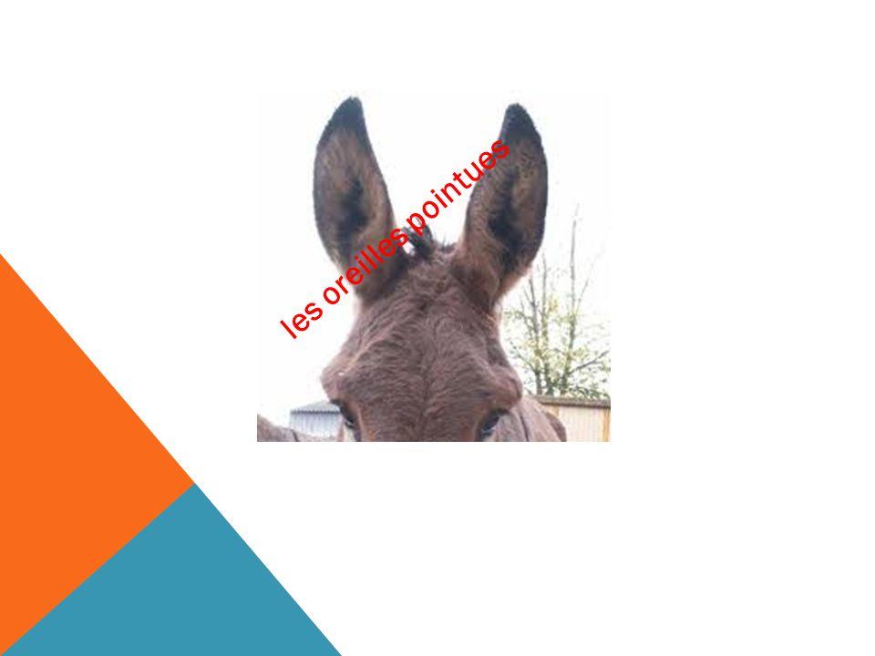 ??? les oreilles pointues