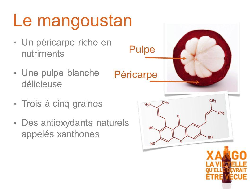 Un péricarpe riche en nutriments Une pulpe blanche délicieuse Trois à cinq graines Des antioxydants naturels appelés xanthones Péricarpe Pulpe Le mangoustan