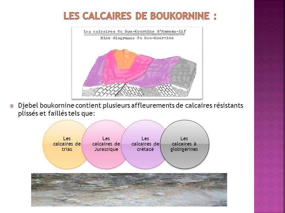 Djebel boukornine contient plusieurs affleurements de calcaires résistants plissés et faillés tels que: Les calcaires de trias Les calcaires de Jurassique Les calcaires de crétacé Les calcaires à globigérines