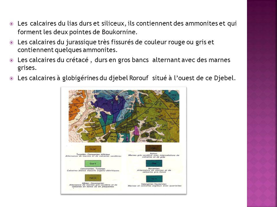 Djebel boukornine est un site de très grande importance pour la sensibilisation et léducation géologique, il est classé comme parc national en 1987 mais il na pas jusqu à nos jours dintérêt international surtout dans le domaine du patrimoine géologique, Cest pour cela qui il faut bien protéger djebel Bou karnine et encourager les gens de le visiter et de mieux sintéresser au sujet du patrimoine géologique tunisien qui est un sujet très important mais malheureusement il est ignoré en Tunisie.
